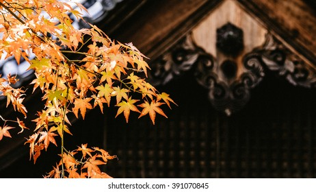 Branch of orange maple leaves, back ground of zen Japanese temple