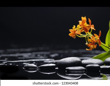 Branch orange orchid with black stones on wet
