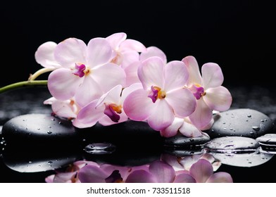 branch orchid on black stones reflection
