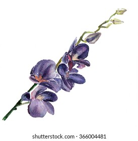 the branch orchid watercolor hand drawn isolated on the white background