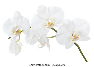 The branch of orchids on a white background