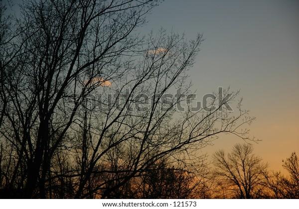 Branch out Dusky sky