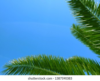 Branch of palm trees up in the sky