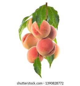 Branch with peaches. Isolated on white background