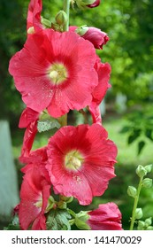 a branch of pink mallow flower in blossom