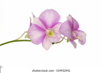 branch pink orchid flowersâ??white background