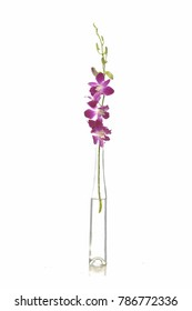 Branch pink orchid flower with bud in glass vase