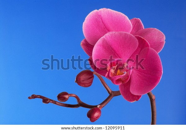 Branch of a purple orchid. A close up.