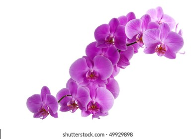 branch of purple orchids