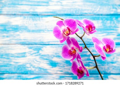 A branch of purple orchids on a blue wooden background