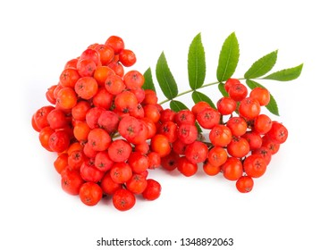 branch of red ashberry isolated on white