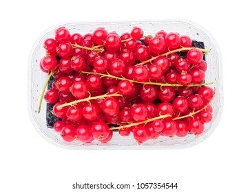 branch of red currant in plastic container on white isolated background.
