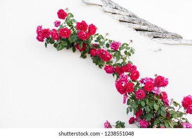 a branch of red roses crawling on a white wall in an italian village