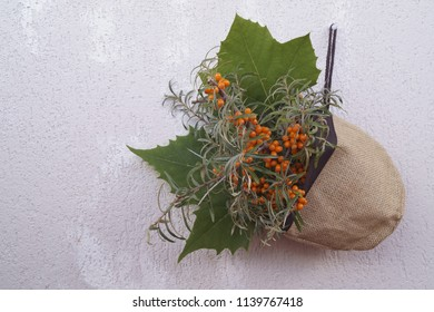 Branch of sea buckthorn berries, seabuckthorn - Hippophae