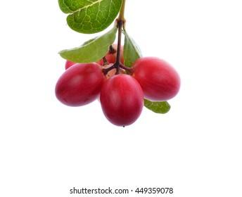 branch of Small pink fruit Carunda or Karonda isolated on white background.