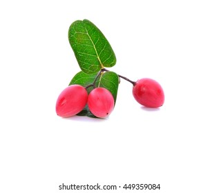 branch of Small pink fruit Carunda or Karonda isolated on white background.