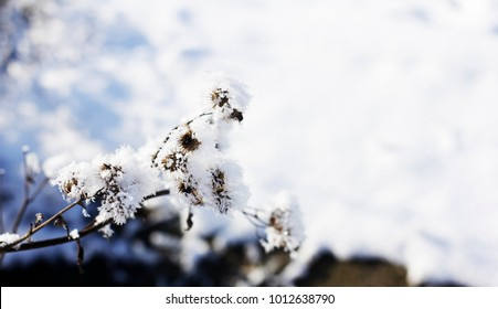 branch in the snow outdoors