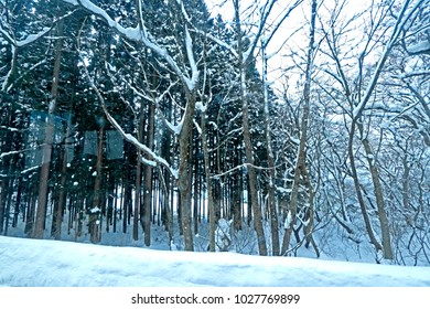 Branch & snow in winter near the road, Japan