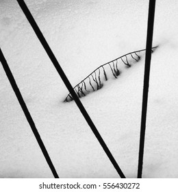 A branch of some plant on a snow with metal rods of a fence on the foreground. Russia, city of Kaluga, February 2016.
