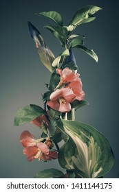 branch with spring flowers on a dark background. Studio photography.
