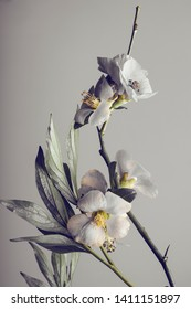 branch with spring flowers on a gray background. spring foliage. studio shooting.