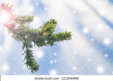 A branch of spruce on a light white-blue background with falling snow, illuminated by the sun, with a soft focus. Happy New Year and Christmas background/