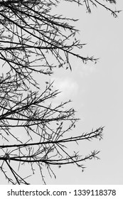Branch of tree in black and white.