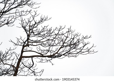 Branch of tree isolated on white background. This has clipping path.