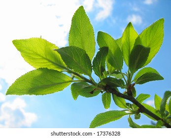 branch of tree with lush green foliage closeup