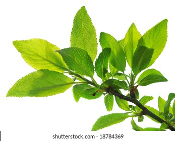branch of tree with lush green foliage