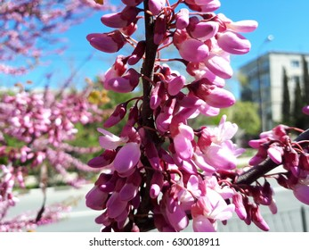 Branch of a tree with pink flowers