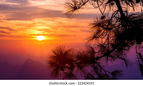 branch and Tree silhouette with sunrise sky background