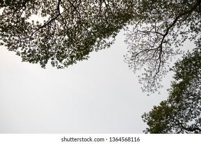 Branch of tree in sky