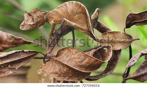 A branch of the tree sprouts leaf shaped like leprosy