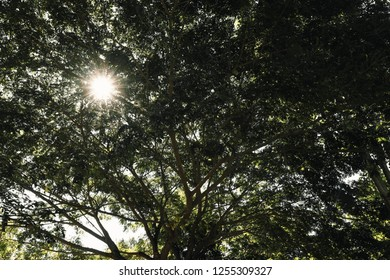 branch of tree with sunlight