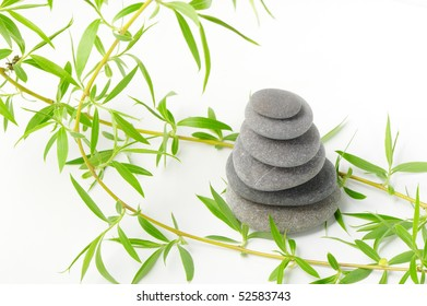 Branch of a tree of a willow and pebble. It is isolated on a white background