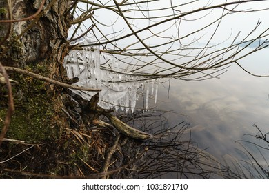 Branch trees in the ice. Icy rain.
