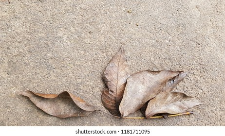 Branch of walnut tree with dry brown leaves on wet cement floor background. Monochrome natural backdrop in shades of brown. Autumn mood concept in sepia tones. Fall leaves on the ground after rain.