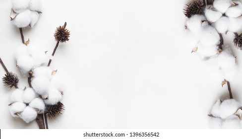 branch of white cotton on a white background, minimalism