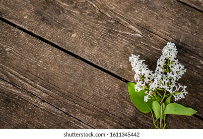 A branch of white lilac on wooden boards. white flowers on a wooden background.