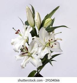 branch of white lilies on white