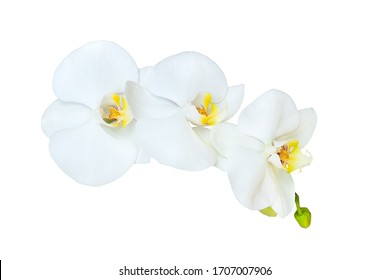 Branch of white orchid isolated on a white background