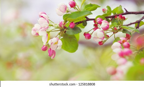 branch with a lot of white and pink flowers