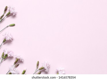 A branch withlight pink carnations on textural pink paper. Spring background for design and decoration