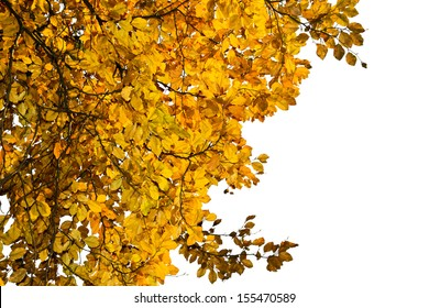 branch with yellow leaves isolated on white