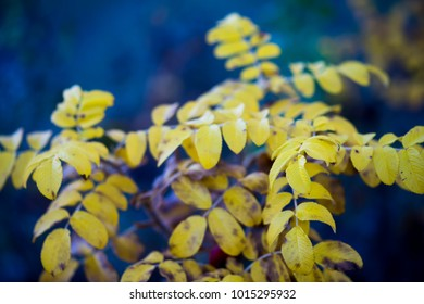 Branch with yellow leaves in natural light