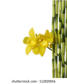 Branch yellow orchid with bamboo grove