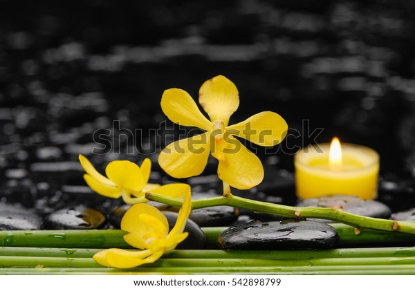 Branch yellow orchid with candle ,long stem and therapy stones