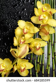 Branch yellow orchid on bamboo grove –wet background
