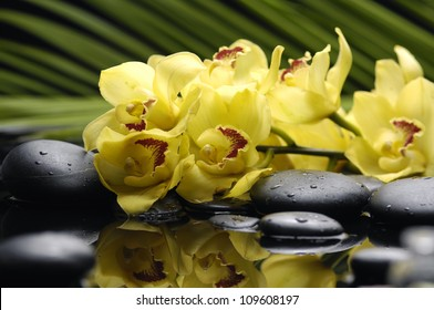 Branch yellow orchid with palm leaf and zen stone